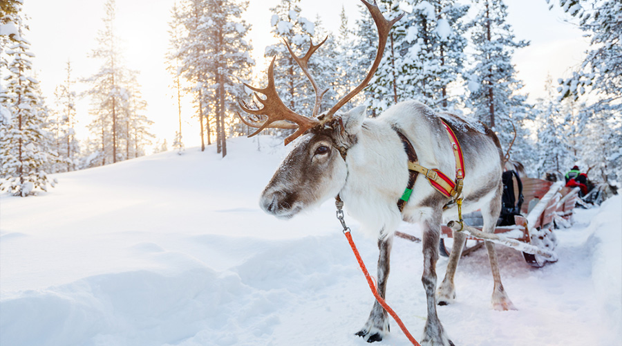 Noël à Levi